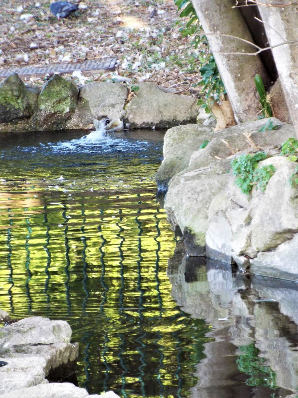REFLECTION OF ROCKS IN LAKE WATER