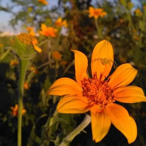 Bonita tarde. Flowers Flower Nature Plant Beauty In Nature Followme Vscocam VSCO Vscogood Vscocamphotos VSCO Cam Photography Followmee Instagram: Gabrieladelarosa