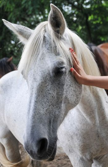 Close-up of hand stroking horse outdoors