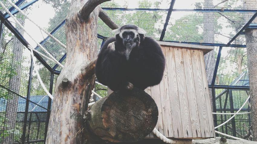 обезьяна философия глубокие мысли