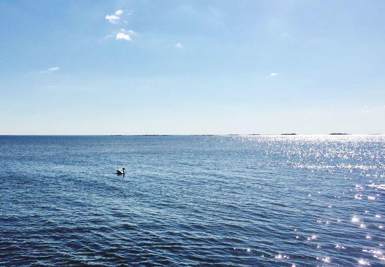 Beautiful Swan Water Sea Sky Horizon Over Water Beauty In Nature Horizon Scenics - Nature Tranquility Animals In The Wild Bird