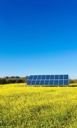 Solar painel in yellow field Sky Environment Blue Alternative Energy Renewable Energy Field Fuel And Power Generation Clear Sky Solar Energy Environmental Conservation Solar Panel Landscape Nature Plant