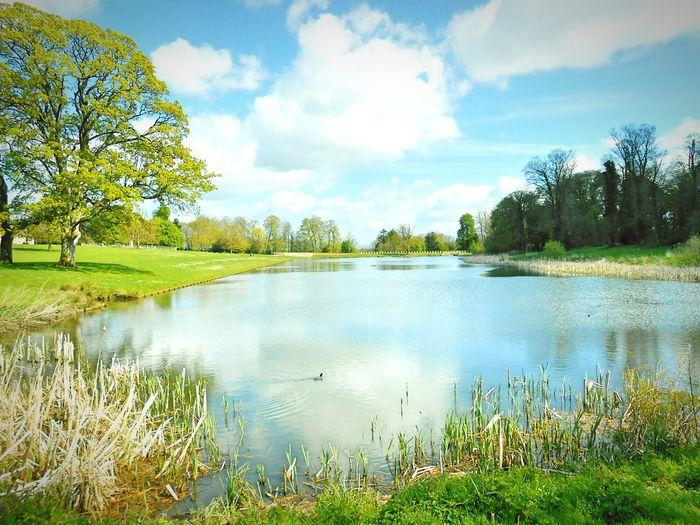 Taken by me on my Nikon S3200 yesterday. Spring Nature Lake Trees LydiardPark Swindon Wiltshire Uk Europe 2016