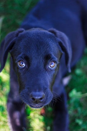 Blick Augen Hund Animal Themes One Animal Animal Domestic Animals Pets Domestic Dog Portrait Looking At Camera Black Color Close-up Puppy Outdoors EyeEmNewHere My Best Photo