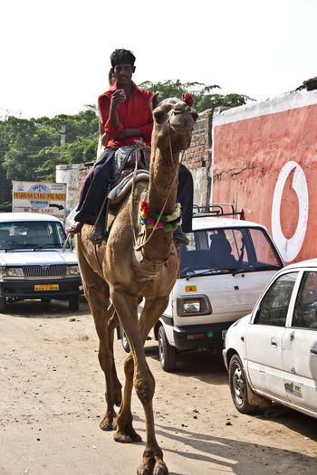 Man riding horse on road