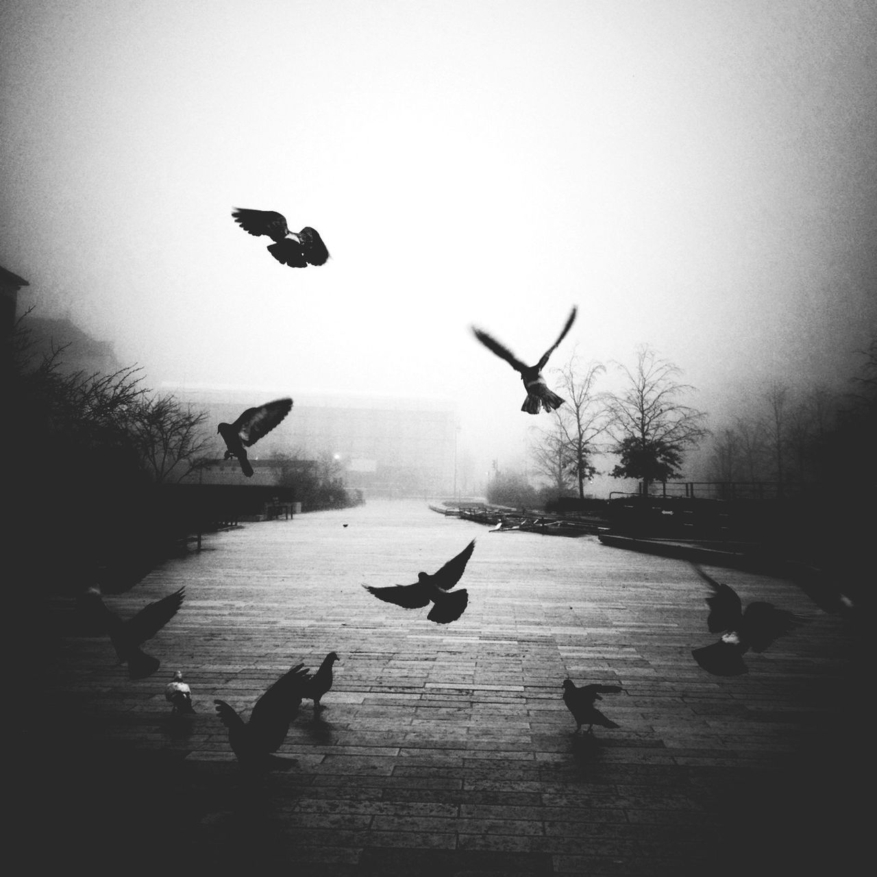 Birds in foggy park