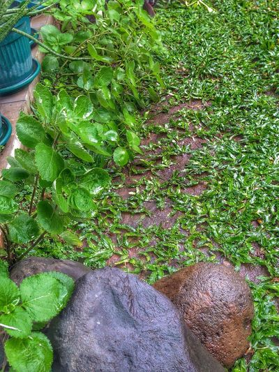 Green Grass & Stone after the Rain