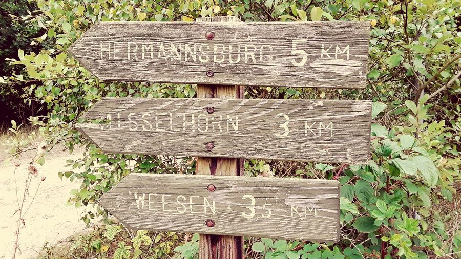 Ye olde fingerpost Hermannsburg Weesen Misselhorn Fingerpost Guidepost Backgrounds Wood - Material Full Frame Textured  Tree Text Architecture Close-up Weathered Plant