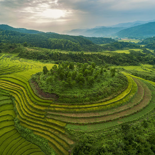 Landscape Scenics - Nature Agriculture Beauty In Nature Mountain Environment Green Color Rural Scene Growth Sky Cloud - Sky Plant Tranquil Scene Land Farm Field Crop  Tranquility Nature Terraced Field No People Mountain Range Outdoors Plantation