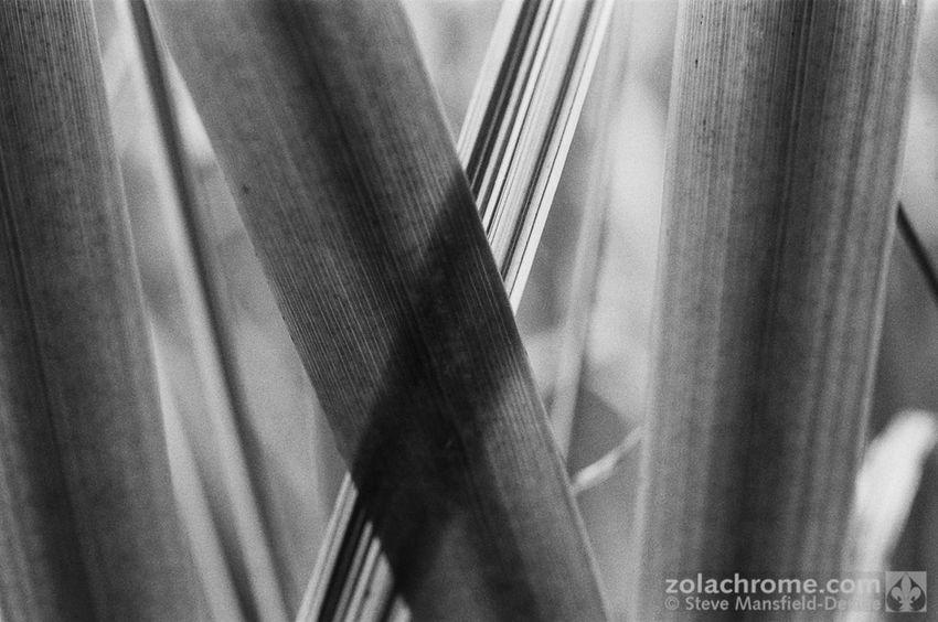 Shooting on monochrome film again https://mansfield-devine.com/zolachrome/2018/08/more-monochrome/ Black & White Nature Plant Blackandwhite Close-up Monochrome Nature Pattern Plant Selective Focus