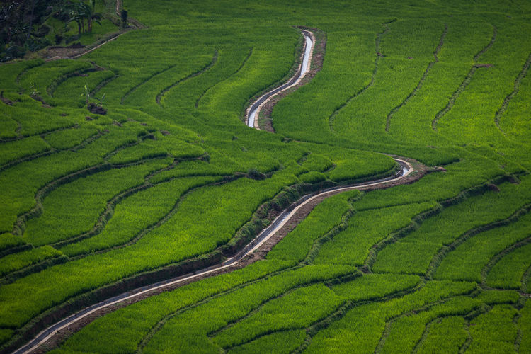 Green Fields Landscape Nature Farm Ricefield Abstract Abstract Nature Terrace Field River