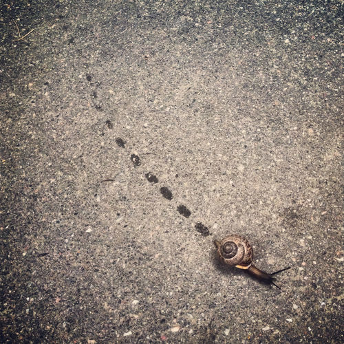 High Angle View Of Snail Crawling On Road