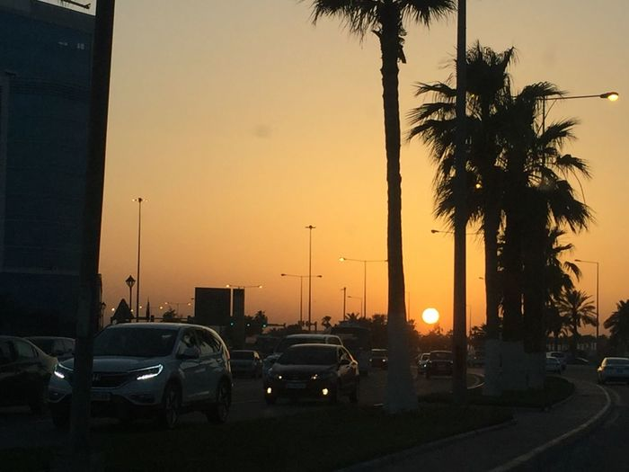 Sunset in middle of the road Beauty In Nature City Land Vehicle Outdoors Palm Tree Sunset Transportation Tree