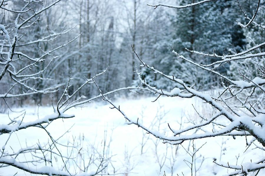 Winter Forest Snow Covered Winter Winter Season Wintertime Winter_collection Cold Winter ❄⛄ Winter 2016 Showcase: January January It's Cold Outside Snow Covered Branch Cold And Frosty Snowy Trees Snow ❄ Winter Trees Winter Walk Winter Day Finland