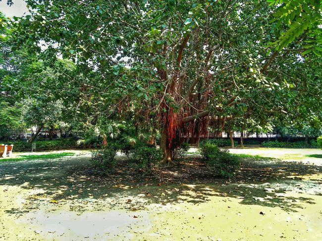 Day Green Color Outdoors No People Nature Growth Tree Shadow Grass Water Beauty In Nature Banyan Tree Banyan Tree Roots Full Frame