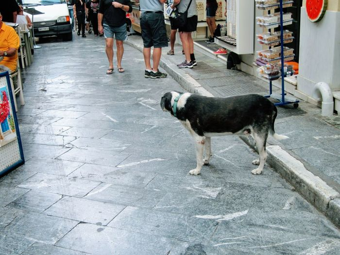 🇬🇷 old dog contemplating Outsider In Enjoy The New Normal Tourist The Tourist Chaotic City Street Life Big City Life Feeling Lonely Athens, Greece Street Documentary Street Dog From A Dog's Perspective Stray Of The Day Strays Of Greece Stray Dog What A Life City Street Dog Low Section Low Angle View Bonjour Tristesse Silent Protest  Waiting Game