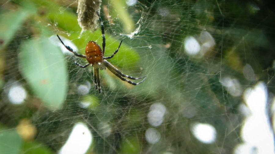 Brown spider in