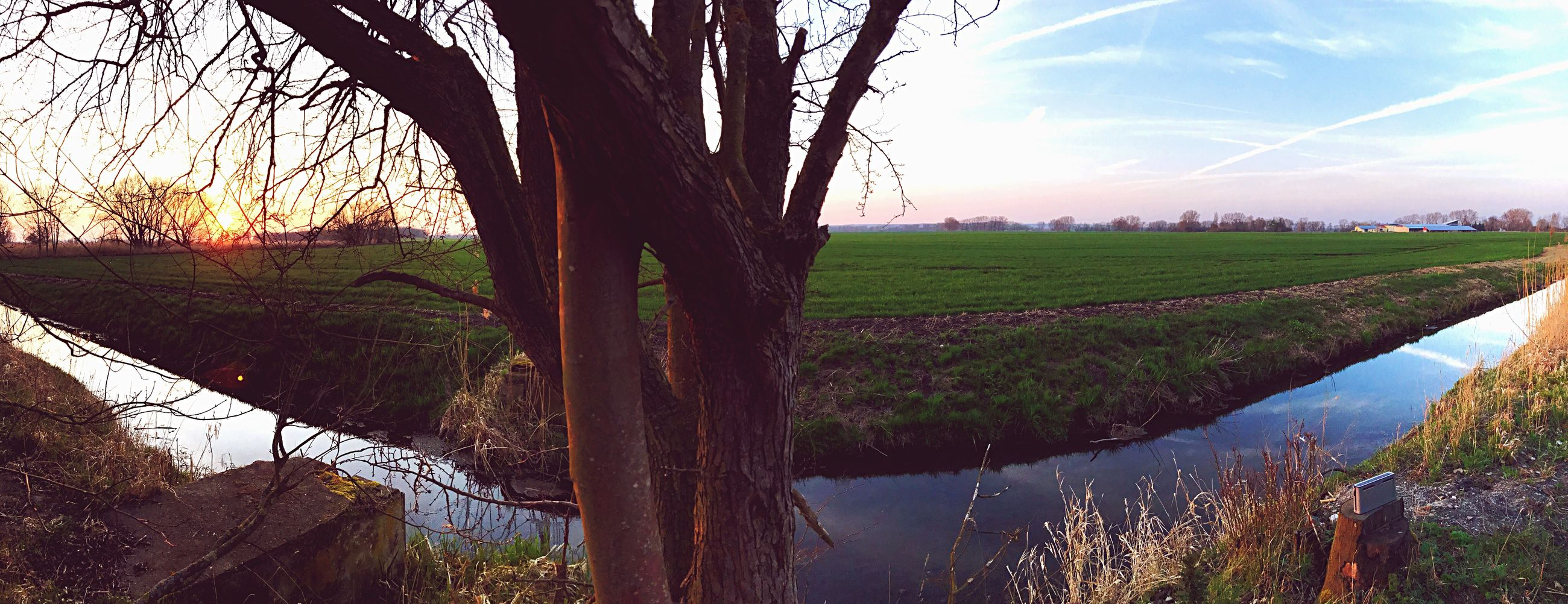 tree, nature, growth, rural scene, landscape, agriculture, sunset, outdoors, field, scenics, tranquility, sky, beauty in nature, tranquil scene, social issues, no people, day