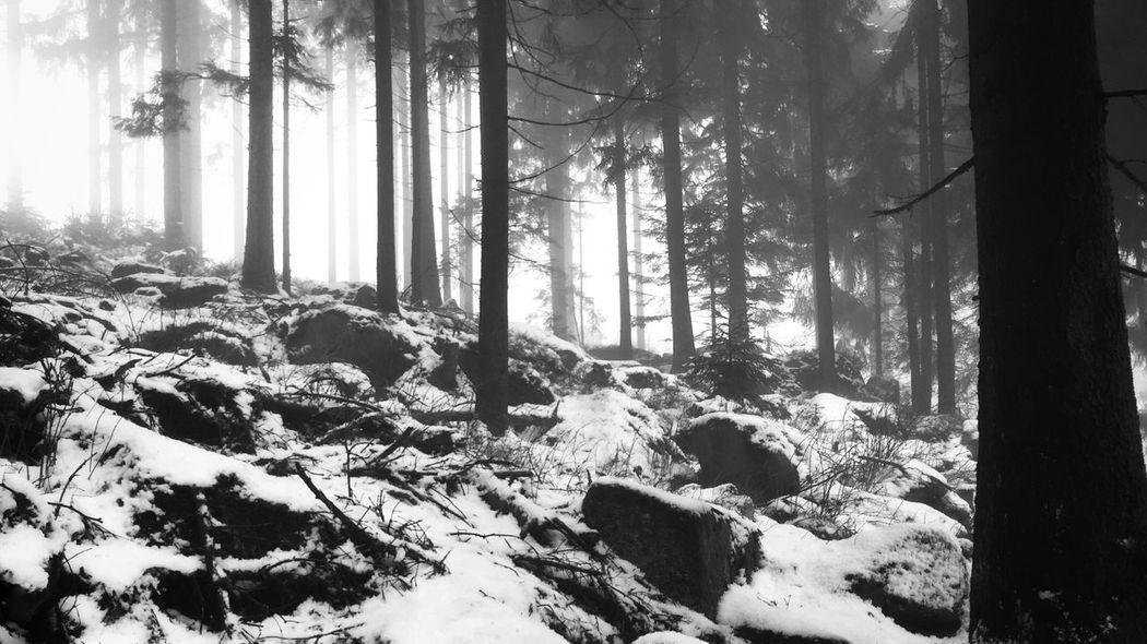 EyeEm Best Shots - Black + White Black And White TreePorn Bavaria Iphonephotography IPhone The Week Of Eyeem EyeEm Best Shots - Nature Nature Showcase: February EyeEm Nature Lover Winter