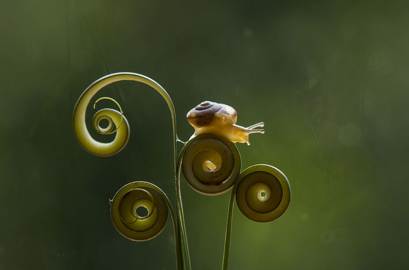 Close-up of snail on tendril