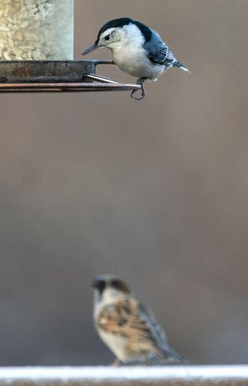 Two birds Bird