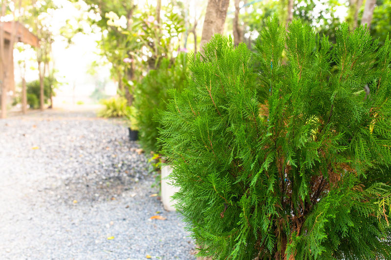 Close-up of plants growing in park