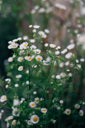 A Ladybug Plant Flower Fragility Vulnerability  Flowering Plant Freshness Beauty In Nature Close-up Nature Green Color