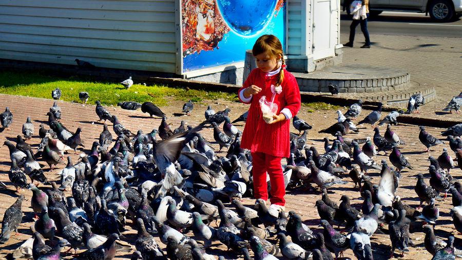 Pigeons Happy