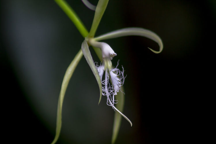 One of the white orchids in nature.