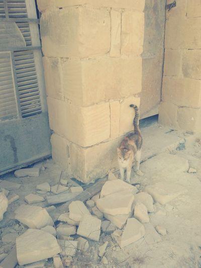 Catoftheday Cat Retrica S3neo Abondoned Places