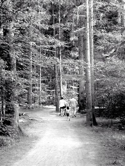 IPhoneography Trees Blackandwhite Black And White Nature EyeEm Nature Lover Summer EyeEm Best Shots - Black + White Wood OpenEdit