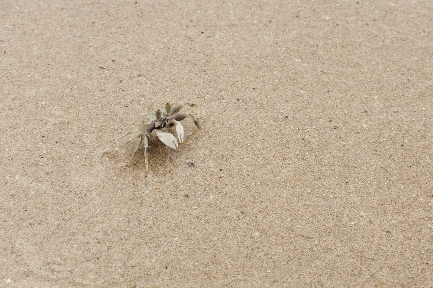 Catch me if you can Animal Themes Animal Animals In The Wild Beach Beauty In Nature Close-up Crab Day High Angle View Nature No People One Animal Outdoors Sand Small Objects Tiny Chance Encounters