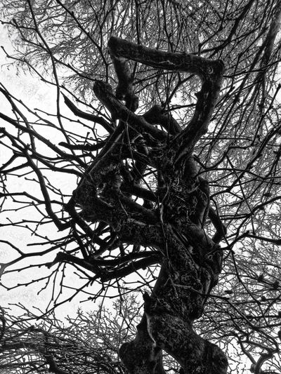 My Winter Favorites no snow only Birds Hugging A Tree Blackandwhite Winter Trees Blackandwhite Photography Textures And Surfaces Black And White Eye4photography  @ Royal Pavilion Gardens