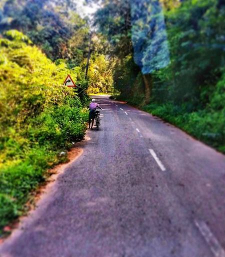 Asphalt Beauty In Nature Day Green Color Growth Mammal Men Nature Outdoors Real People Rear View Road Scenics The Way Forward Tranquil Scene Transportation Tree