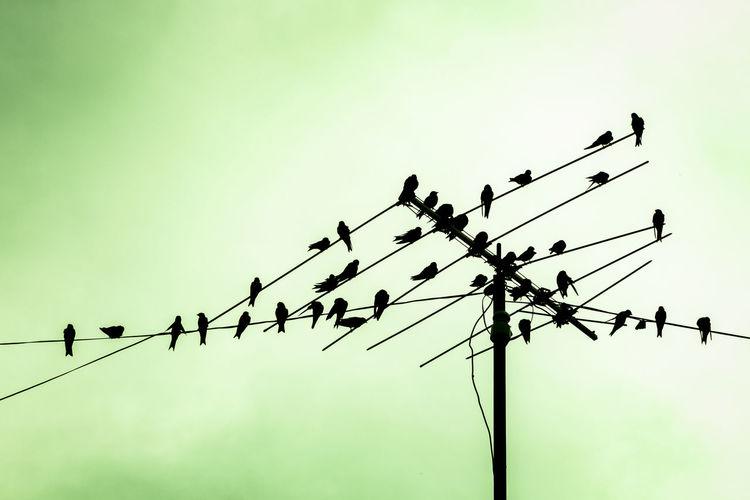Birds Pigeons