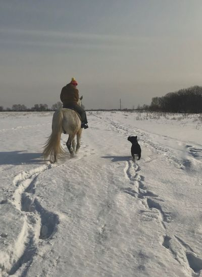 Winter Snow Cold Temperature Full Length Weather Real People Nature Domestic Animals Warm Clothing Leisure Activity Field Outdoors Lifestyles Togetherness Dog Pets Day Riding Rear View