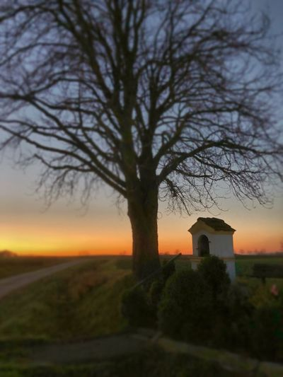 Bare tree on field by building against sky at sunset