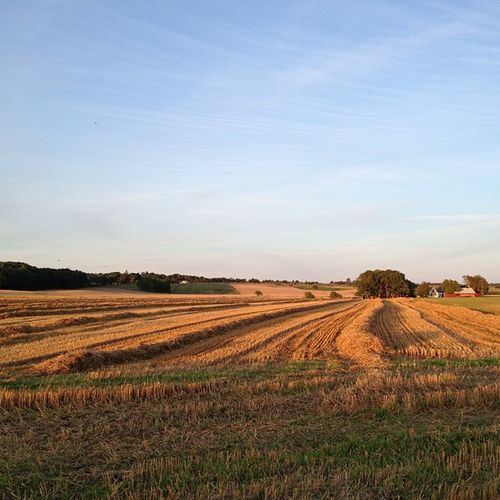 Delightful Light Sunset over the Fields of toecroft sweden igersskane ig_sweden skåne hejlokaltidningen