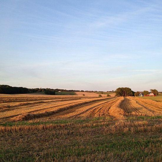 Delightful Light Sunset over the Fields of toecroft sweden igersskane ig_sweden skåne hejlokaltidningen