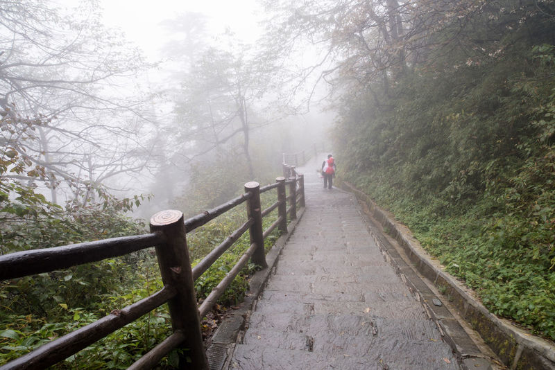 Father, carrying kid,stepping down steep stone stairs in foggy mountain. Fatherhood Moments Hard Kids Road Stairs Father Fatherhood  Fog Mountain Outdoors People Protection Railing Real People Steep Stone The Way Forward Trail Tree Walking