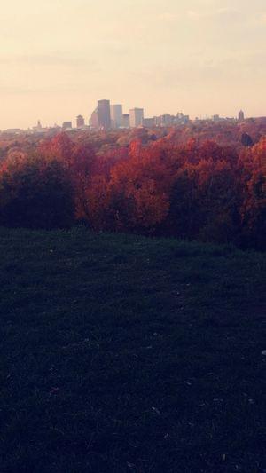City Tree Cityscape Sunset Autumn Red Change Leaf Sky Landscape