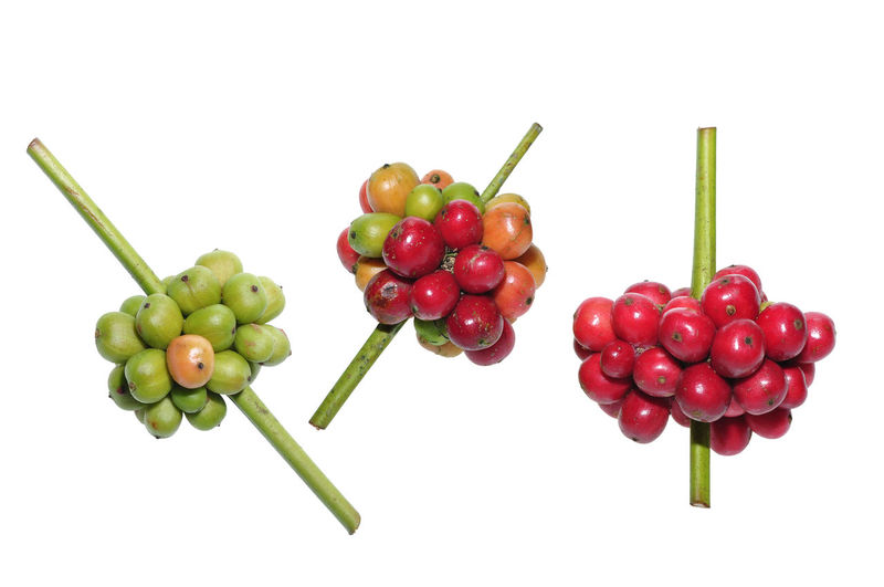 fresh coffee beans on white White Background Studio Shot Fruit Food And Drink Freshness Healthy Eating Food Red Wellbeing Green Color Still Life Indoors  Cut Out Plant Stem Close-up No People Grape Large Group Of Objects Cherry Group Of Objects Ripe