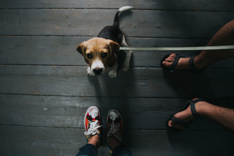 Low section of people standing by dog on hardwood floor