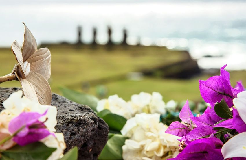 Beautiful flowers for a wedding in Easter Island Isla De Pascua Rapa Nui Easter Island Tahai Weddingplannerineasterisland Love Flower Purple Outdoors Nature Plant No People Lake Beauty In Nature Freshness Close-up EyeEm Ready   EyeEmNewHere