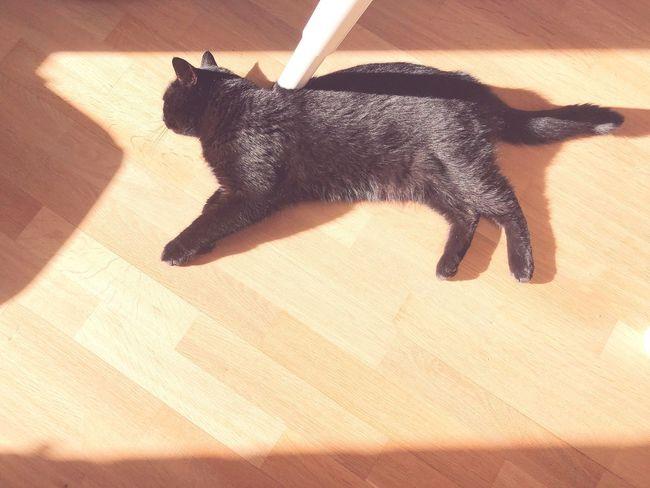 Shadow High Angle View Sunlight Animal Animal Themes No People Mammal One Animal Indoors  Pets Black Color