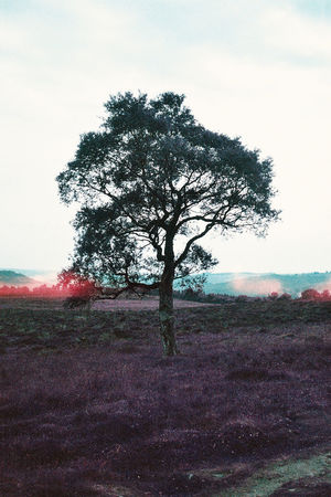 Landscape Tree Field Nature Sky Outdoors No People Beauty In Nature Landscape Day Walking Scenics Landscape_photography Derbyshire Uk Beauty In Nature Branch England Countryside Trees Tree Pink Tranquility Olympus Trip 35