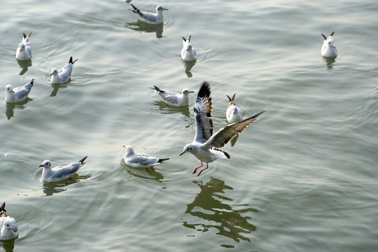 Animal Wildlife Animals In The Wild Animal Themes Animal Bird Vertebrate Water Seagull No People Day Nature Seagulls Seagulls And Sea Seagulls In Flight Birds Seabirds