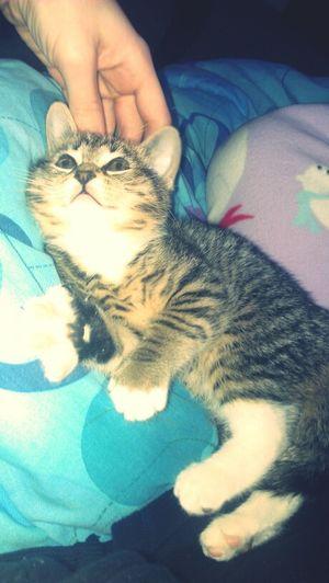 My Kitty Cat