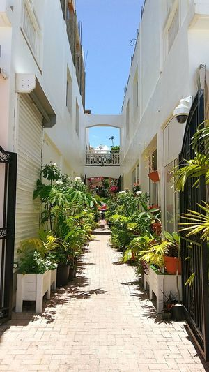 St Maarten alley Alley Alleyway Plants Outside Photography Outside Green Island Cruise Ship Cruise Carnival Carnival Sunshine Carnival Sunshine Cruise Architecture Building Exterior Plant Built Structure Topiary Flowerbed Landscaped