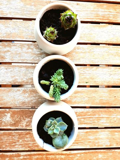 Directly above shot of potted plants on table